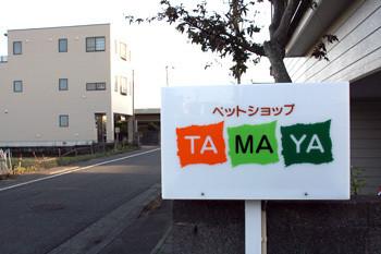 tama7