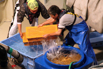 春漁最終日6