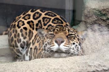 日本平動物園10