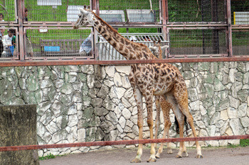 日本平動物園12