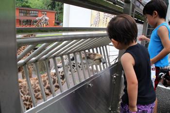 日本平動物園13