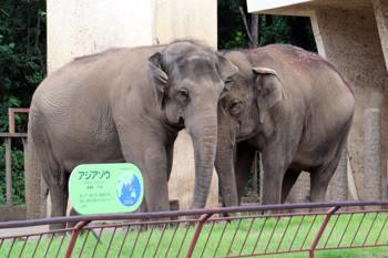 日本平動物園14
