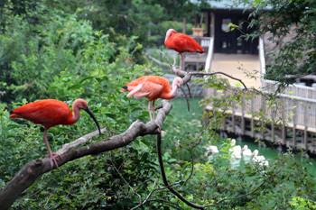 日本平動物園15