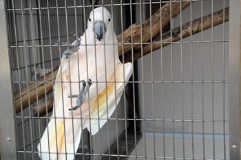 日本平動物園18