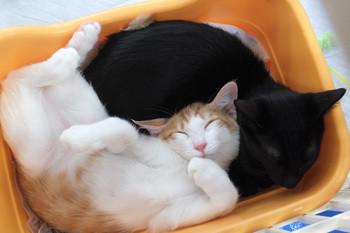 猫譲渡会1