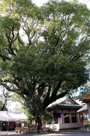 伊河麻神社5